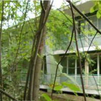 "Номер ""Дачная резиденция 2-4м. дерево"""